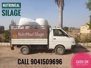 Silage Gujarat